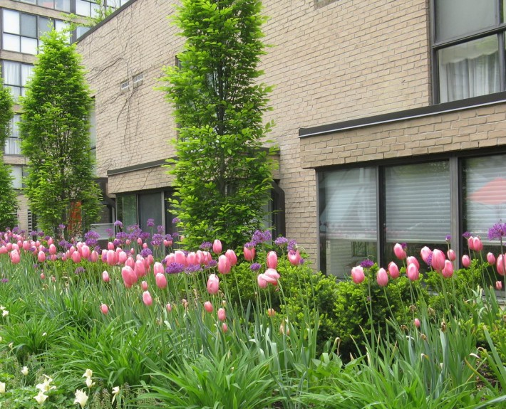 Market Square Tulip Bed
