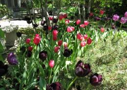 Spring Residential Garden