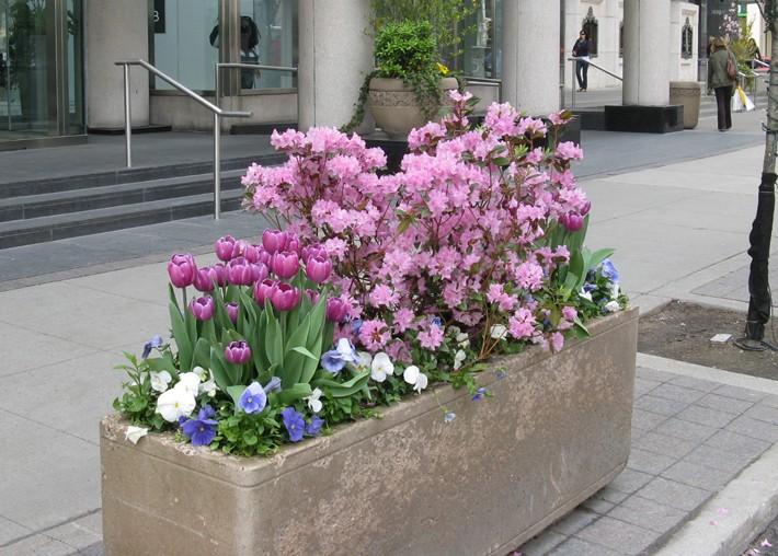 Manulife - Spring Box